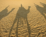 081-camel-shadows-egypt