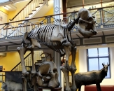 02-natural-history-national-museum-of-ireland