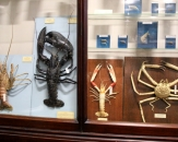04-crabs-and-homars-national-museum-of-ireland