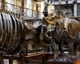 10-natural-history-national-museum-of-ireland