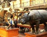 12-natural-history-national-museum-of-ireland