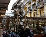 13-natural-history-national-museum-of-ireland