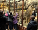 15-natural-history-national-museum-of-ireland