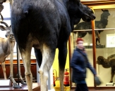 19-natural-history-national-museum-of-ireland