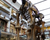 24-natural-history-national-museum-of-ireland
