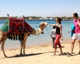 19-camel-on-the-beach